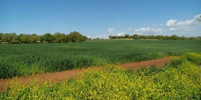 שדות בית לחם