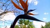 ציפור גן עדן בגינת קסם המגע